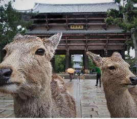 Full-day Tour of Nara & Osaka Thumbnail